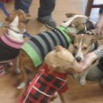 Animal Alliance of NJ adoptable puppies