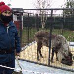 Reindeer Thunder and Yukon Cornelius