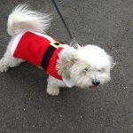 Canine Visitor to Belle Mead Animal Hospital Live Reindeer Event