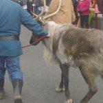 Reindeer Thunder enters with Yukon Cornelius