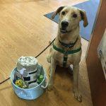 BMAH Bark Park Basket Winner 2017 Buddy the dog