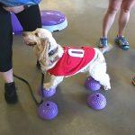 Rehabilitation exercises at Bark in the Park Nightt
