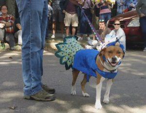 Adoptable Dog Pet Masquerade Parade