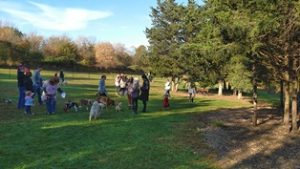 Dogs Playing in Dog Park at Howl-O-Ween