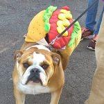 Hot Dog at Howl-O-Ween