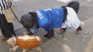Monday Night Football Pet Masquerade Parade