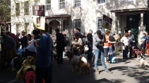Pet Masquerade Parade