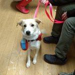 Alliance adoptable dog two