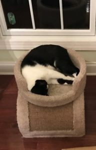 Cat sleeping on cat perch