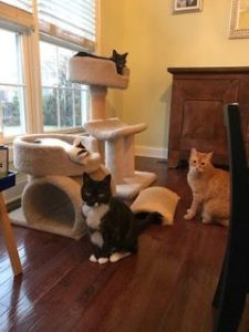 Cats with cat tree and scratchers