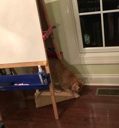 Floor cat scratcher