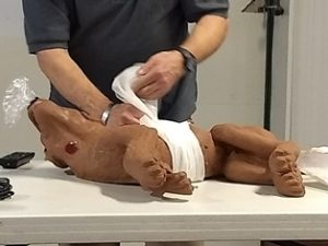 Pet First Aid Dog bandage