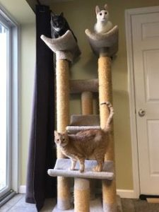 Tall Cat Tree