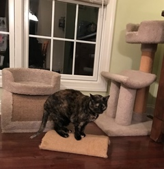 floor cat scratcher and cat tree