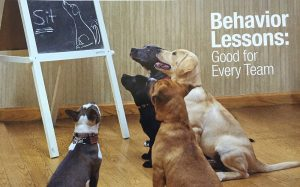 Puppy Social Behavior Lessons