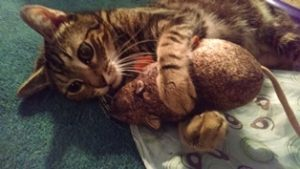 Cat Taurus_with_Mouse_toy