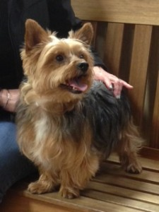 Dog Bentley patient