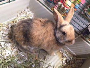 Rabbit Bugs Amwell Pet Supply