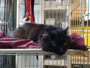 Tree Cat Needs a Forever Home
