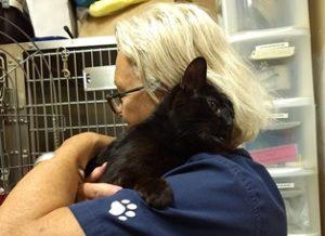 Adoptable Cat Cole Hugging
