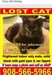 CAPIC cat Tyson Missing