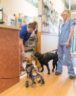 Specially-Abled-Pets at Belle Mead Animal Hospital