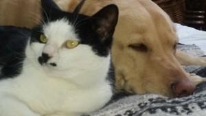 https://vetportal.vetsecure.com/email/1446/cat_and_dog.jpg