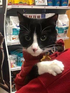 https://vetportal.vetsecure.com/email/1446/BMAH_Whiskers_Kitten.jpg